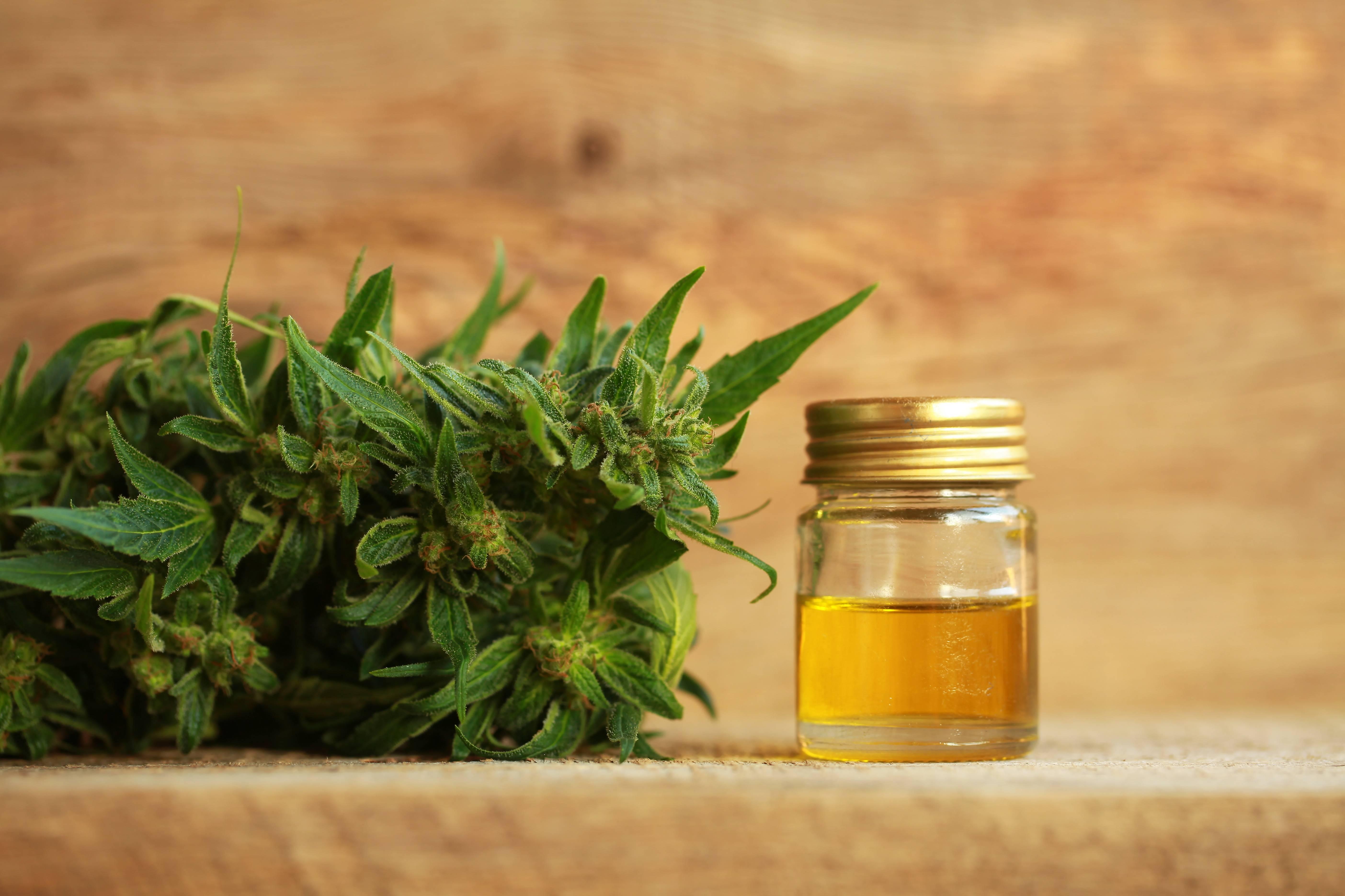 orvosi-marihuana-cbd-olaj-2